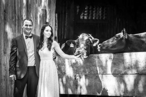 Alles Kuhte zur Hochzeit