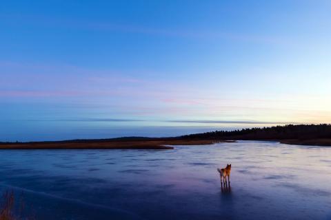 Allein auf dem Eis