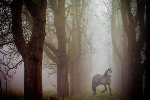 Nebelhorse
