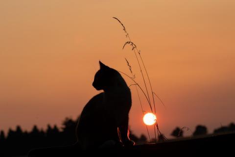 Katze im Abendlicht