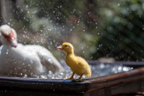 von Mama nass gespritzt