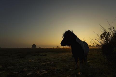 Ponny im Morgenlicht