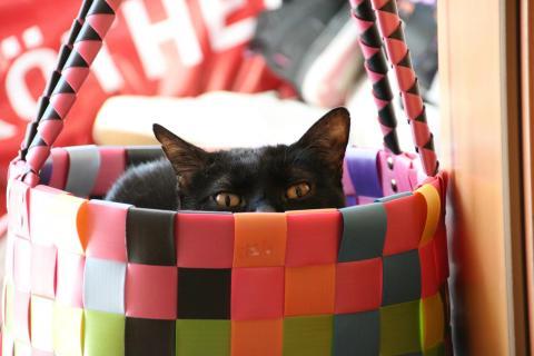Katze im Korb oder wo ist Fido?