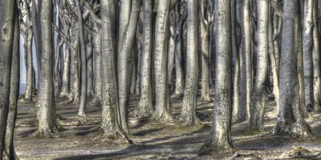 Gespensterwald