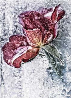 Ice Flower 1