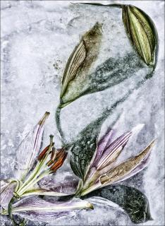 Ice Flower 2