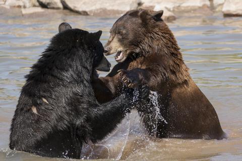 Bärenspiele