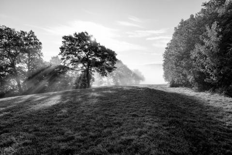 Wenn die Sonne den Nebel vertreibt