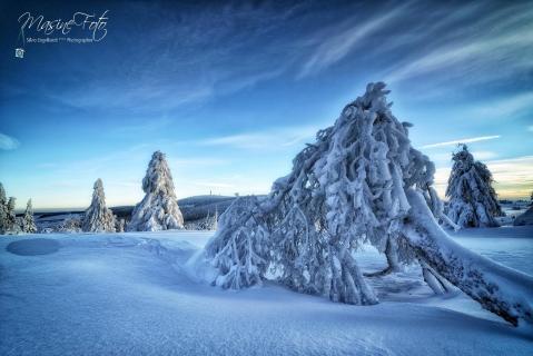 Cold World 2