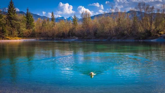 Traumlandschaft Hund badet im Weiher Lenggries