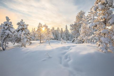 Finnish Winter