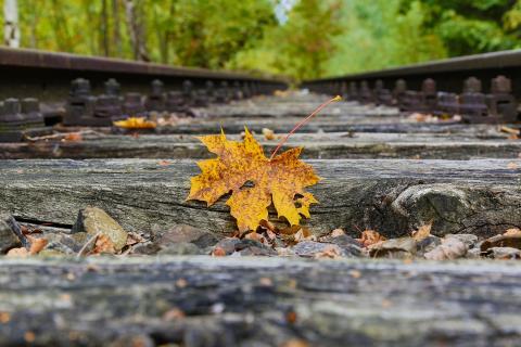 Herbst im Gleisbett