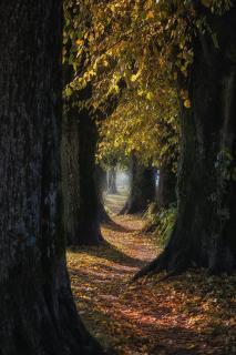 40 Bunter Blätterwald_Ingrid_Hofbauer