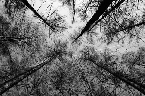 Blick in den Himmel