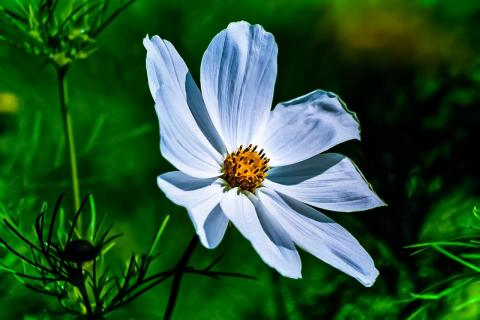 Greatest Flower Picture - My Style