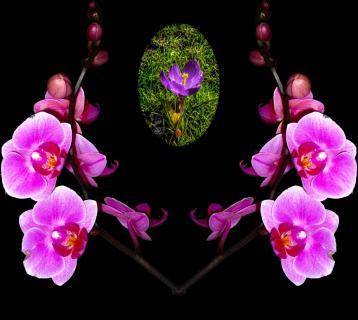 Eine Zeit voller Blumenbilder....