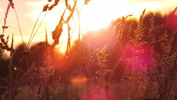 Beautiful Sunshine Flair