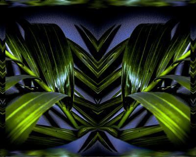 Pflanze-Spiegelung Digital-art (G.C.)