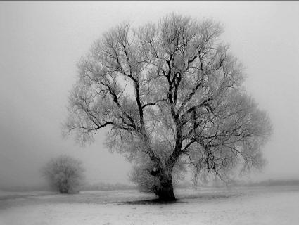 Weide im Winter 6