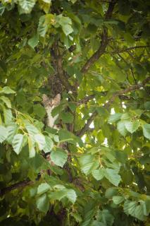 Versteckt im Baum