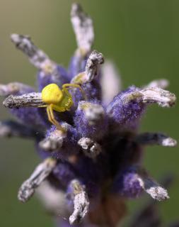 Der Lavendelritt