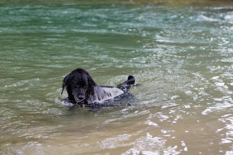 Der Hund geht baden