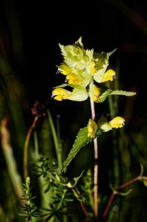Flower In The Dark 2