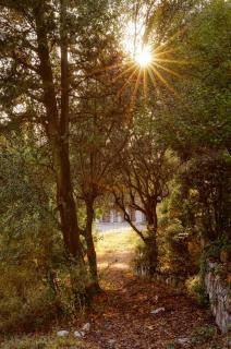 20190806 Nice_Colline_du_Chateau_Sunlight_Trees