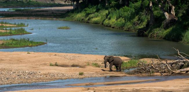 Einsamer Elefant im Flussbett