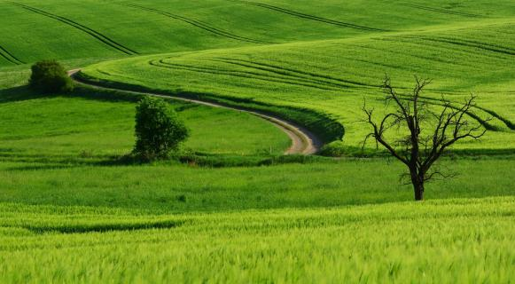 Weg im Grün