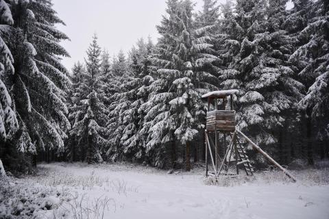 Hochsitz im Winterwald