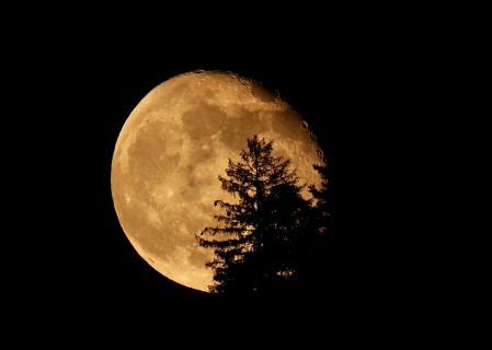Der Mond geht über dem Bergwald auf