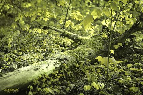 wald grün