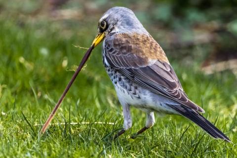 Der frühe Vogel fängt den Wurm