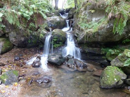 Todtnau Wasserfall 013