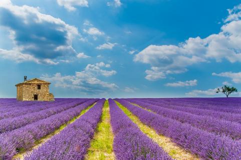 haus im lavendelfeld