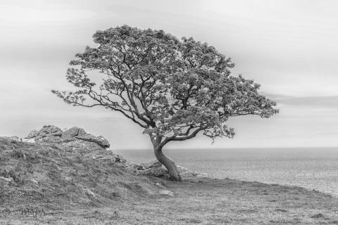 Murlough Bay