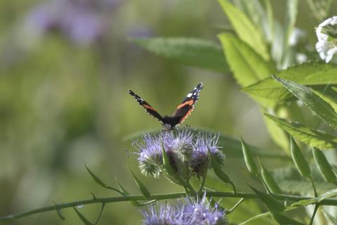 Schmetterling im Spätherbst