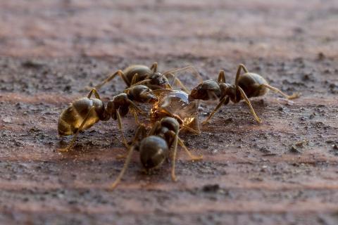 Ameisenmahlzeit