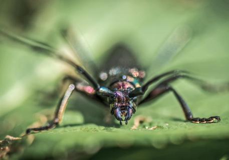 Portrait eines Käfers