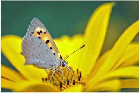 Auf gelber Blüte
