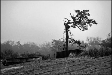 Alter Baum an der Ostseeküste
