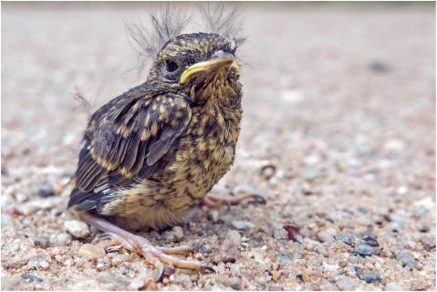 Hilfloser Vogel