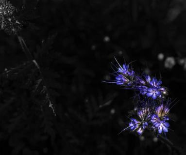 Flower Contrast Power