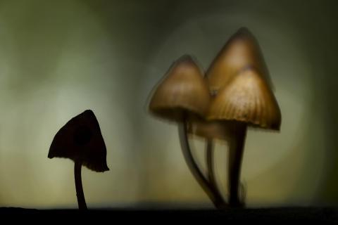 Pilzschatten