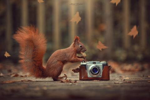 Eichhörnchen kamera