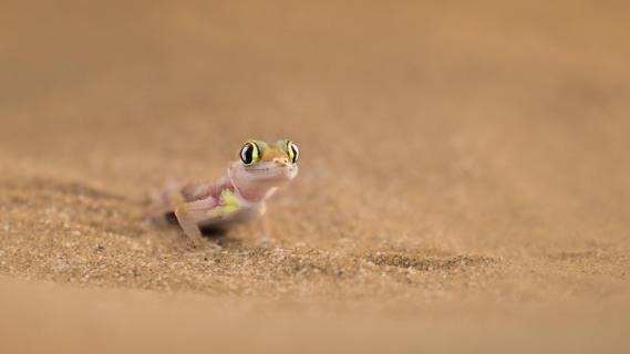 Namibia - Augen der Namib