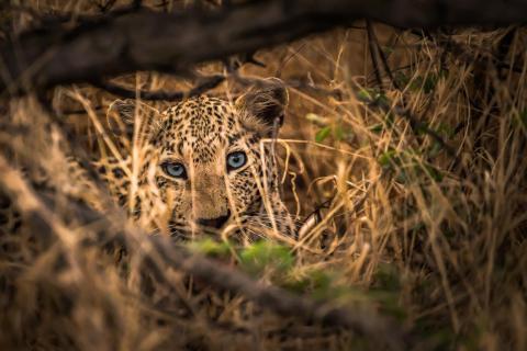 Namibia - Augenkontakt
