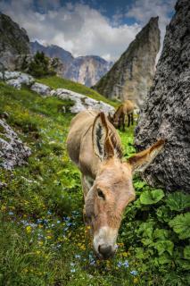 Südtirol - Born Free