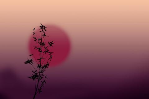 Pflanze im Gegenlicht